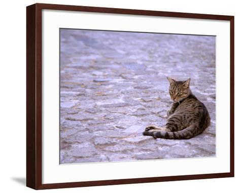 Cat in Street, Lipari, Sicily, Italy-Connie Bransilver-Framed Art Print