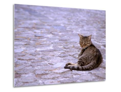 Cat in Street, Lipari, Sicily, Italy-Connie Bransilver-Metal Print