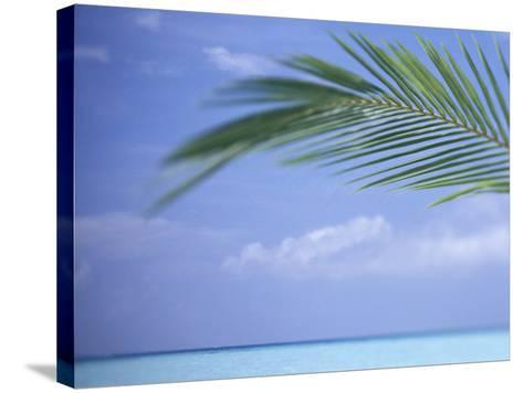 Palm Frond Over Tropical Water-Michele Westmorland-Stretched Canvas Print
