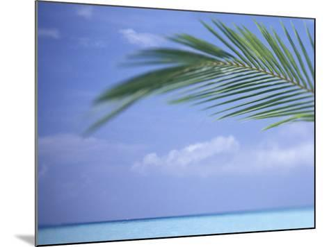 Palm Frond Over Tropical Water-Michele Westmorland-Mounted Photographic Print