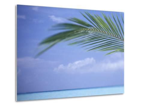 Palm Frond Over Tropical Water-Michele Westmorland-Metal Print
