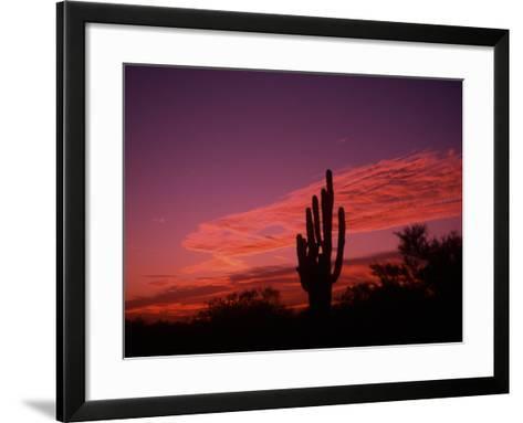 Colorful Cactus in the Sunset, Arizona, USA-Bill Bachmann-Framed Art Print