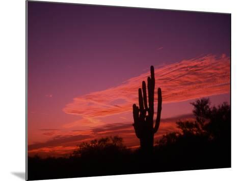 Colorful Cactus in the Sunset, Arizona, USA-Bill Bachmann-Mounted Photographic Print