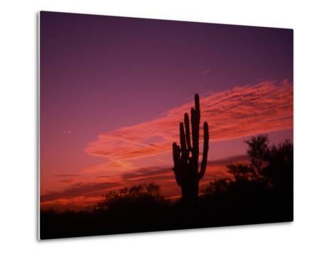 Colorful Cactus in the Sunset, Arizona, USA-Bill Bachmann-Metal Print