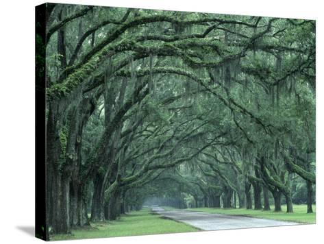 Historic Wormsloe Plantation, Savannah, Georgia, USA-Joanne Wells-Stretched Canvas Print