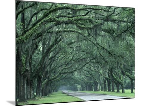 Historic Wormsloe Plantation, Savannah, Georgia, USA-Joanne Wells-Mounted Photographic Print