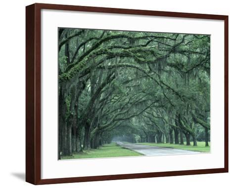 Historic Wormsloe Plantation, Savannah, Georgia, USA-Joanne Wells-Framed Art Print