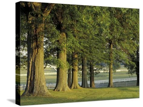 Row of Trees and Fences at Sunrise, Kentucky Horse Park, Lexington, Kentucky, USA-Adam Jones-Stretched Canvas Print