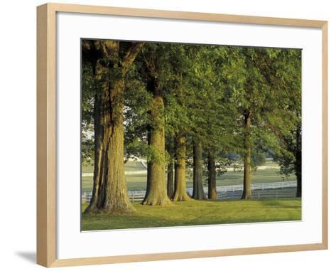 Row of Trees and Fences at Sunrise, Kentucky Horse Park, Lexington, Kentucky, USA-Adam Jones-Framed Art Print