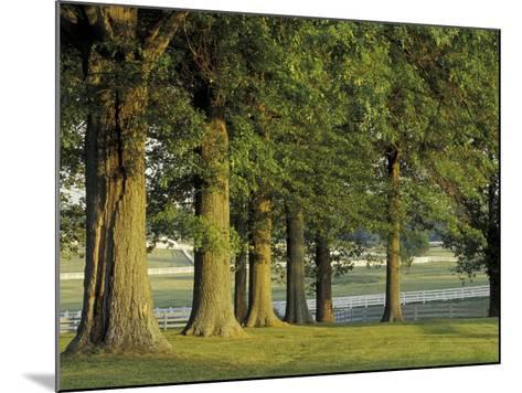 Row of Trees and Fences at Sunrise, Kentucky Horse Park, Lexington, Kentucky, USA-Adam Jones-Mounted Photographic Print