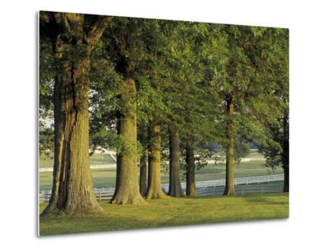 Row of Trees and Fences at Sunrise, Kentucky Horse Park, Lexington, Kentucky, USA-Adam Jones-Metal Print