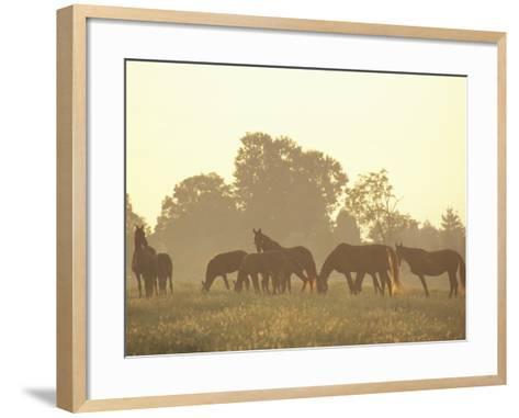 Thoroughbred Race Horses at Sunrise, Louisville, Kentucky, USA-Adam Jones-Framed Art Print