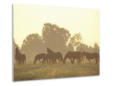 Thoroughbred Race Horses at Sunrise, Louisville, Kentucky, USA-Adam Jones-Metal Print