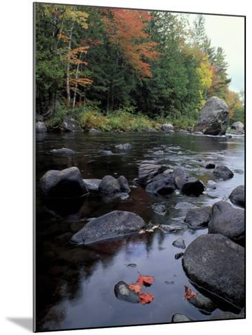 The 100 Mile Wilderness section of the Appalachian Trail, Maine, USA-Jerry & Marcy Monkman-Mounted Photographic Print