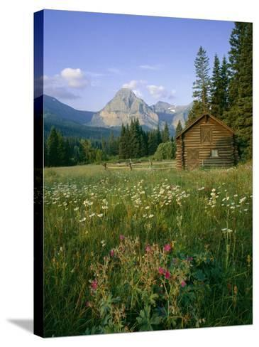 Old Park Service cabin in the Cut Bank Valley of Glacier National Park in Montana-Chuck Haney-Stretched Canvas Print