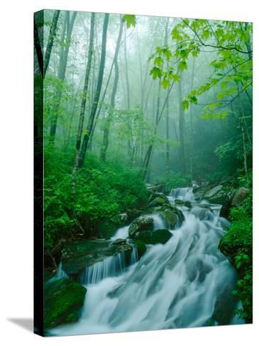Linn Cove Creek Cascading Through Foggy Forest, Blue Ridge Parkway, North Carolina, USA-Adam Jones-Stretched Canvas Print
