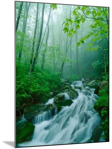 Linn Cove Creek Cascading Through Foggy Forest, Blue Ridge Parkway, North Carolina, USA-Adam Jones-Mounted Photographic Print