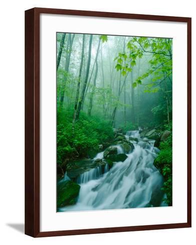 Linn Cove Creek Cascading Through Foggy Forest, Blue Ridge Parkway, North Carolina, USA-Adam Jones-Framed Art Print