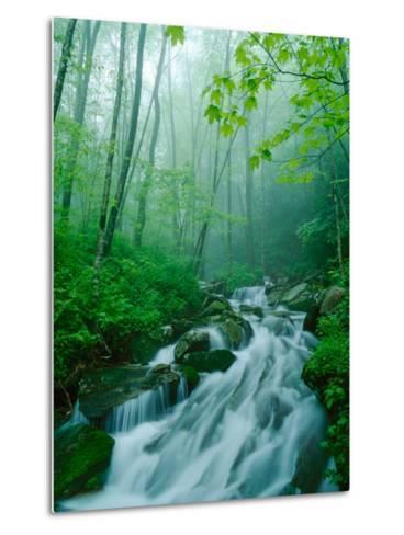 Linn Cove Creek Cascading Through Foggy Forest, Blue Ridge Parkway, North Carolina, USA-Adam Jones-Metal Print