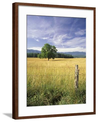 Tree in Grassy Field, Cades Cove, Great Smoky Mountains National Park, Tennessee, USA-Adam Jones-Framed Art Print