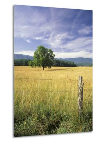 Tree in Grassy Field, Cades Cove, Great Smoky Mountains National Park, Tennessee, USA-Adam Jones-Metal Print