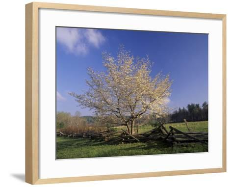 Flowering Dogwood Tree and Rail Fence, Great Smoky Mountains National Park, Tennessee, USA-Adam Jones-Framed Art Print