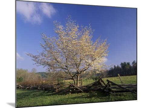 Flowering Dogwood Tree and Rail Fence, Great Smoky Mountains National Park, Tennessee, USA-Adam Jones-Mounted Photographic Print