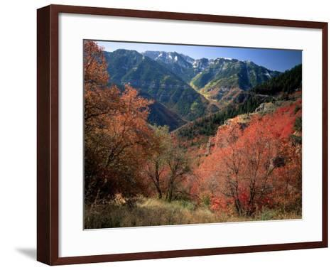 Maples on Slopes above Logan Canyon, Bear River Range, Wasatch-Cache National Forest, Utah, USA-Scott T^ Smith-Framed Art Print