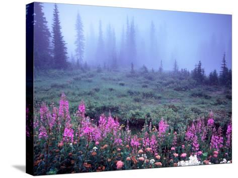 Foggy Alpine Meadow, Mt. Rainier National Park, Washington, USA-Janell Davidson-Stretched Canvas Print