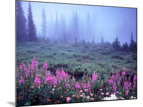 Foggy Alpine Meadow, Mt. Rainier National Park, Washington, USA-Janell Davidson-Mounted Photographic Print
