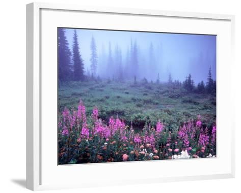 Foggy Alpine Meadow, Mt. Rainier National Park, Washington, USA-Janell Davidson-Framed Art Print