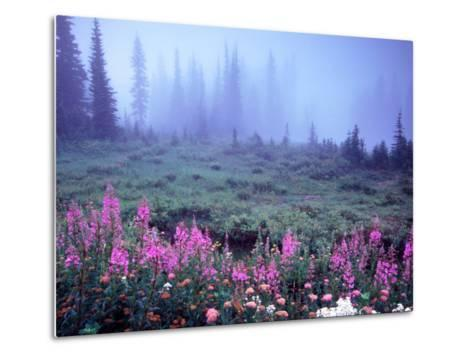 Foggy Alpine Meadow, Mt. Rainier National Park, Washington, USA-Janell Davidson-Metal Print