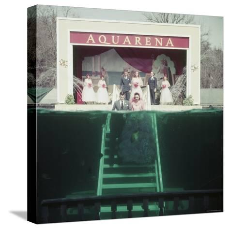 Couple Getting Married Underwater at Aquarena-John Dominis-Stretched Canvas Print