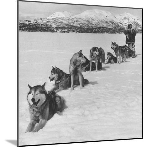 Dog Sledding Team-Nat Farbman-Mounted Photographic Print