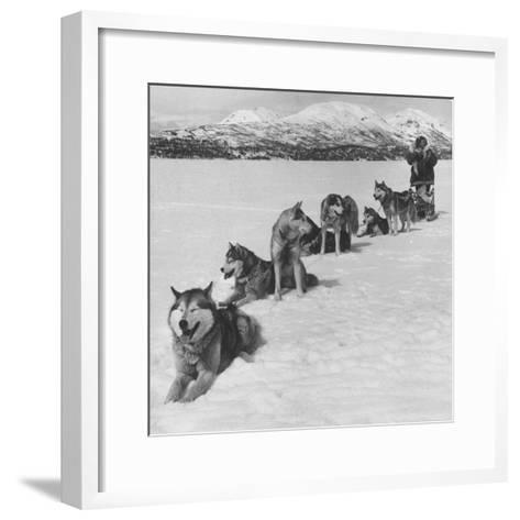 Dog Sledding Team-Nat Farbman-Framed Art Print