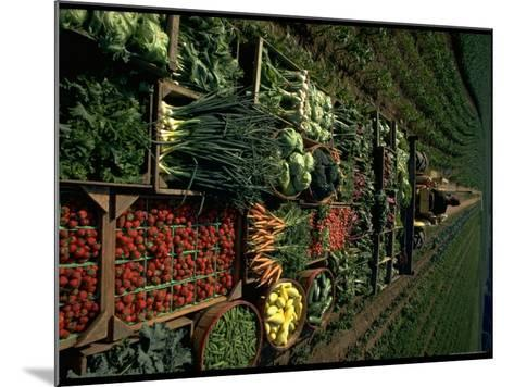 Farmer Hugh Tuttle Tractoring Fresh Produce from 50 Acre Farm Through Field to His Roadside Store-John Dominis-Mounted Photographic Print