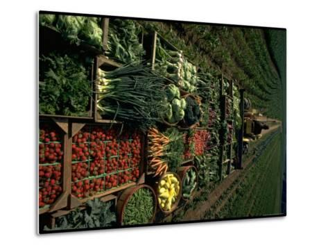 Farmer Hugh Tuttle Tractoring Fresh Produce from 50 Acre Farm Through Field to His Roadside Store-John Dominis-Metal Print