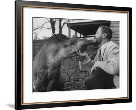 Writer/Naturalist Gerald Durrell Petting South American Tapir in His Private Zoo on Isle of Jersey-Loomis Dean-Framed Art Print