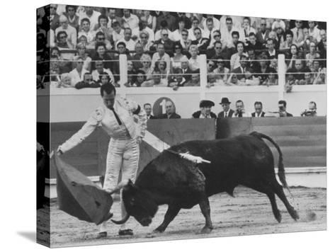 Matador Luis Miguel Dominguin During Bullfight-James Burke-Stretched Canvas Print