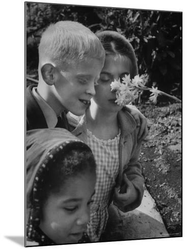 Blind School Children During an Outing in Brooklyn Botanical Gardens of Fragrance-Lisa Larsen-Mounted Photographic Print