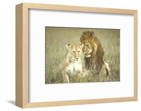 A Pair of Lions in the Wild in Africa-John Dominis-Framed Art Print