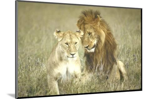 A Pair of Lions in the Wild in Africa-John Dominis-Mounted Photographic Print