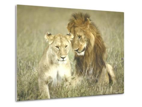 A Pair of Lions in the Wild in Africa-John Dominis-Metal Print