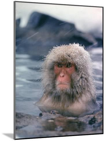 Japanese Macaque, Snow Monkey Sitting in Waters of Hot Spring in Shiga Mountains During a Snowfall-Co Rentmeester-Mounted Photographic Print