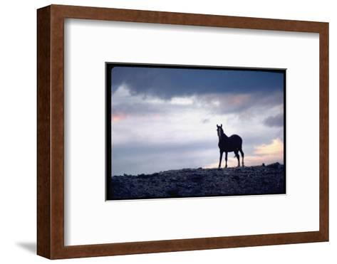 Wild Mustang Horses Running Across Field in Wyoming and Montana-Bill Eppridge-Framed Art Print