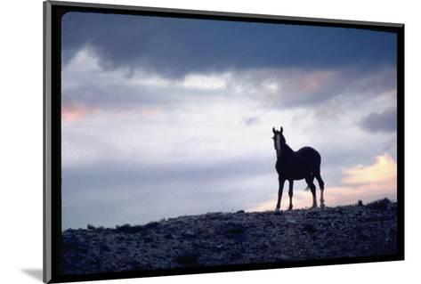 Wild Mustang Horses Running Across Field in Wyoming and Montana-Bill Eppridge-Mounted Photographic Print