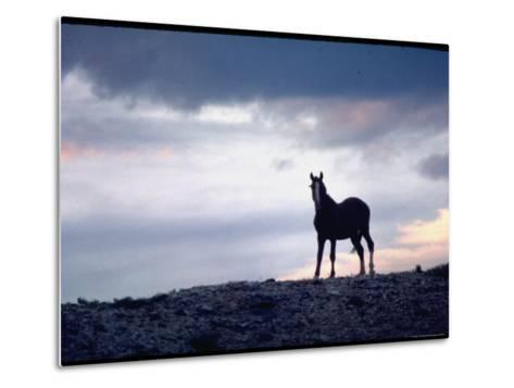 Wild Mustang Horses Running Across Field in Wyoming and Montana-Bill Eppridge-Metal Print