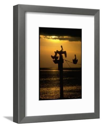 Pelicans in the Sunset at Key Biscayne, Florida-George Silk-Framed Art Print