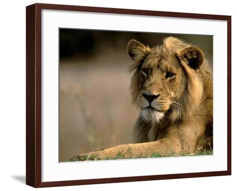 Lioness, Rare Maned Female, Okavango Delta, Botswana-Pete Oxford-Framed Art Print