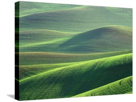 Wheat Springs in the Hills of the Palouse Country, Idaho, USA-Chuck Haney-Stretched Canvas Print